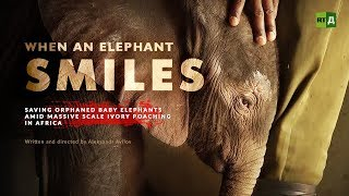 Download When an Elephant Smiles. Saving orphaned baby elephants amid massive scale ivory poaching in Africa Video