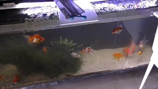 Download A BIRD in the Fish Room?! 800 Gallon Aquarium Room Preparations. Daily Dose 56 Video