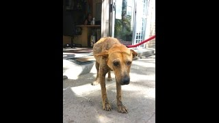 Download Shelter dog cries himself to sleep at night... Video
