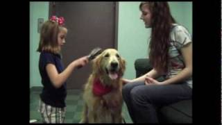 Download (Documentary) Therapy Dogs: Guardian Angels for Abused Children Video