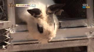 Download SBS [동물농장] - 서울 도심 골목 토끼왕국 Video