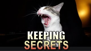 Download Talking Kitty Cat 53 - Keeping Secrets Video