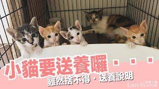 Download 真的到了小貓們要送養的這一天了...【好味貓日常】EP21 Video