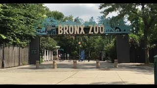 Download NEW YORK BRONX ZOO! SEA LION FEEDING! BABY GORILLAS, GIRAFFES, TIGERS and MANY MORE! FUN FOR KIDS! Video