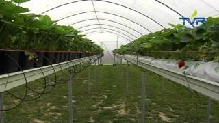 Download Akademia Farmera. Uprawiamy biznes odc. 3 Video