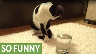 Download Cat has mind blown by sparkling water Video