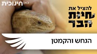 Download להציל את חיות הבר | הנחש והקמטן Video