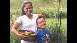 Download Homestead Family Harvesting Fresh Indian Summer Garden Vegetables Video