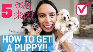 Download Get Your Parents to Say YES to a PUPPY, Guaranteed!! 5 Easy Steps Video