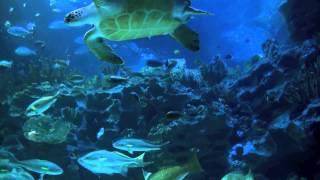 Download Aquarium 2hr relax music Video