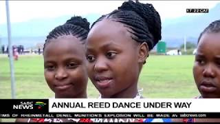 Download Thousands of maidens attend the annual Reed Dance Video
