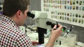 Download U of Pennsylvania, Dept of Biochemistry & Biophysics - Molecular Mechanisms in Medicine Video