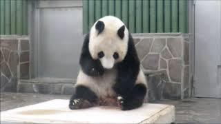 Download のんびりとパンダのお食事タイム2018年7月20日 Video