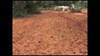 Download Dry Land Farming in India - Part - 1 Video