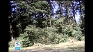 Download Tala de 300 árboles en montañas de San Rafael de Heredia preocupa a los vecinos Video