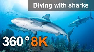 Download 360°, Diving with sharks. 8K Underwater video Video