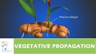 Download VEGETATIVE PROPAGATION Video