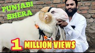 Download Shera Di Kaum Punjabi - EID 2018 (Sold) Video