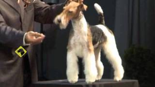 Download ″Perros en acción″ SICALAM Montevideo 2011 Video