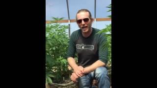 Download Yeti Farms Clone Greenhouse Video