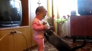 Download Bé khóc nhè khi mèo mẹ cắp mèo con đi mất Video