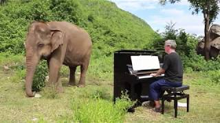 Download Bach on Piano for Blind Elephant Video