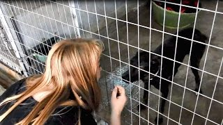 Download The dog that no one would adopt - Sofi's story Video