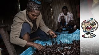 Download Madagascan Vanilla Trade Controlled By Chinese Businesses Video