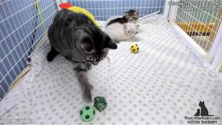 Download Fantastical Kittens - Crinkle Ball Delivery Video