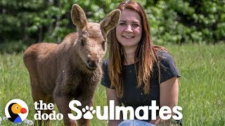 Download A Baby Moose Adopted This Woman as Her Mom | The Dodo Soulmates Video