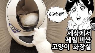 Download 세상에서 제일 비싼 고양이 화장실 85만원?! Most Expensive Cat Litter Box Video