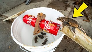 Download $5 HOMEMADE Mouse Trap ACTUALLY WORKS!!! (How To Make) Video