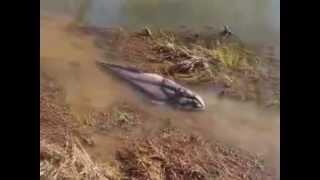 Download Strange Creatures 2012!! Amazing Video Video