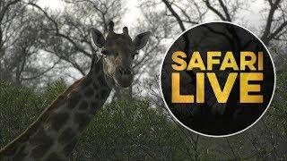 Download safariLIVE - Sunrise Safari - July 20, 2018 Video