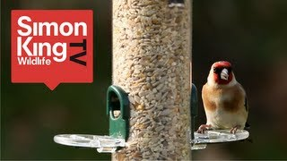 Download How to Feed Garden Birds Video