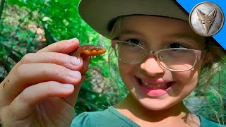 Download Searching for Newts and Salamanders Video