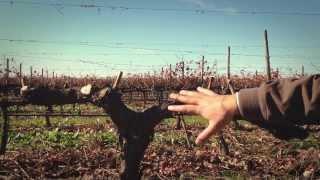 Download A Orientação da Vinha Video