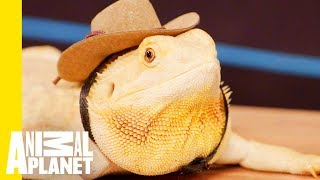 Download How To Take Care Of Your Reptile Video
