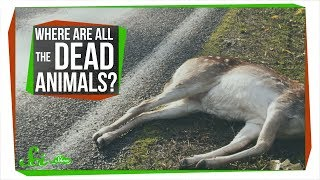 Download Where Are All the Dead Animals? Video