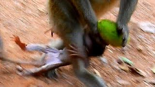 Download Breaking Heart ! Mom monkey make big mistake to her baby Video