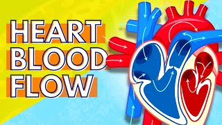 Download 044 How Blood Flows Through the Heart Video