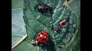 Download Integrated Pest Management Part 1 Video