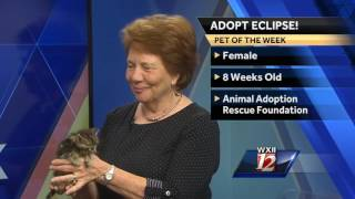 Download Noon Pet Of The Week: Eclipse Video
