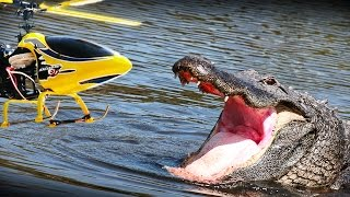 Download RC heli vs. Alligator - what happens? NOT a prank but an experiment!! Video