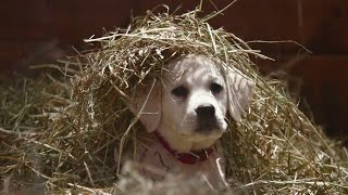 Download Budweiser ″Lost Dog″ Superbowl 2015 Commercial THE FEELS Video