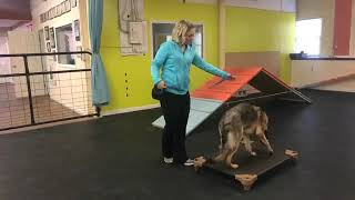 Download Dog training | Introduction to place | Solid K9 Training Dog Training Video