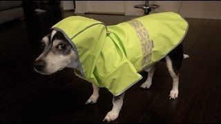 Download MY DOG DOES THE MANNEQUIN CHALLENGE Video