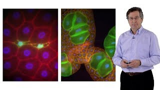 Download Michael Hall (University of Basel): The Story of TOR (Target of Rapamycin) Video