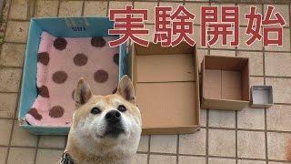 Download 柴犬小春、実験!ハウスが小さくなったらどうする?? Video