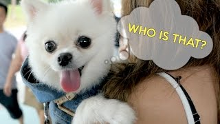Download SO MANY PUPPIES!!! Video